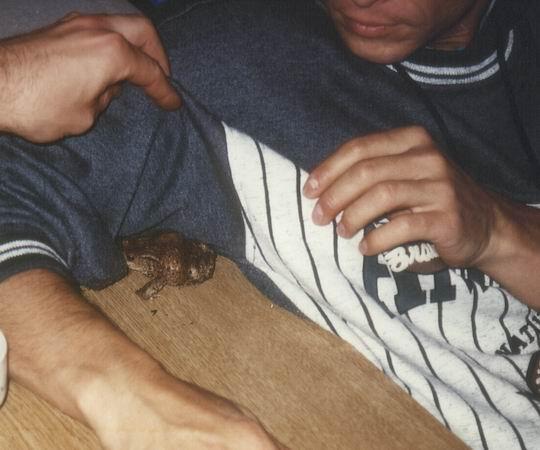 http://www.fordpflanzen.de/bilder/rolf/1996-Lac---KellAmSee/seite03-frosch.jpg