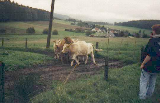 http://www.fordpflanzen.de/bilder/rolf/Ford-einzelbilder/2000-Neuheilenbach/aufregung.JPG
